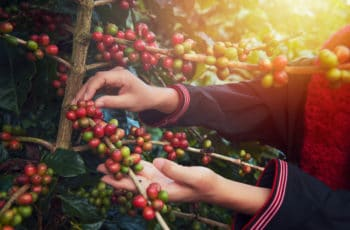 Where Coffee Comes From 2